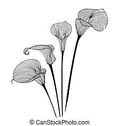 Calla flower - Hand-drawing floral background with flower...