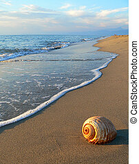 shell - a shell on the beach