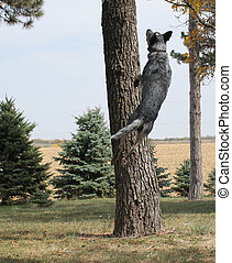 Dog jumping very high - Blue heeler dog jumping very high