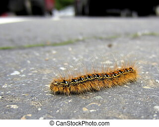 Fuzzy Caterpillar on the Road