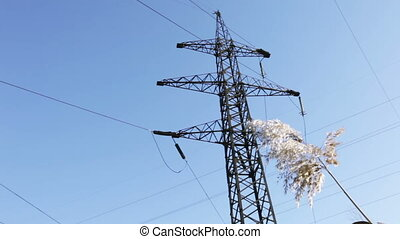 Mast lines - Bulrush against the mast line of high-voltage...