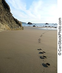 Dog footprints on a sandy beach - Dog footprints track along...