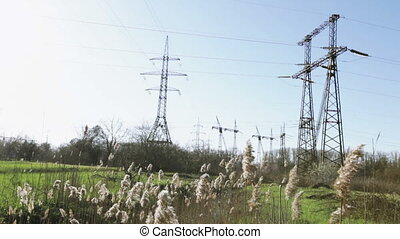Mast lines. - Reeds against the masts of electricity...
