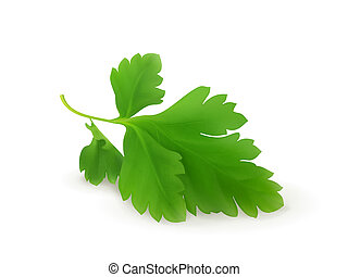 Parsley, vector