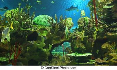 view in oceanarium