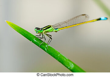 Close up macro image of damselfly