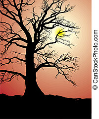Silhouette of an Old Tree in sunset - Silhouette of an old...