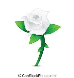 white rose illustration design