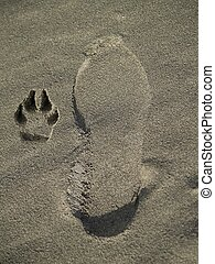 Footprints in the Sand - Man and Dog footprint in the sand