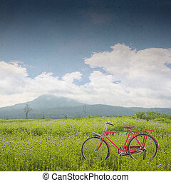 red bicycle - red vintage bicycle on green field background
