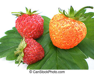 unique strawberry being different from the group