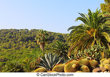 Landscape with cactus in Tenerife, Canary Islands, Spain