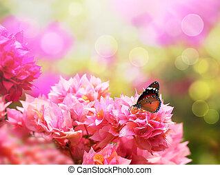 Majestic monarch butterfly on beautiful pink bougainvillea...