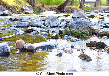 Calm river with stones in forest