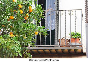 Oranges on tree branch in garden close up