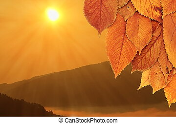 golden leaves and beautiful sunrise - golden faded cherry...
