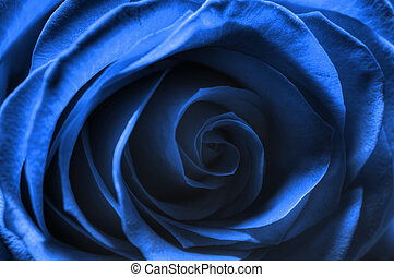 Rosa Blu Bue Rose - Still life macro Blue Rose