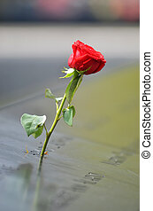 Rose at WTC memorial - Red rose at World Trade Center...