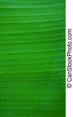 details of banana - green banana leaves close up.