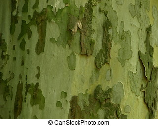 Wood background. - Background with natural and untreated...
