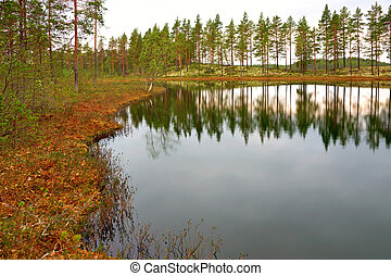 Swedish tarn with reflection of pine trees
