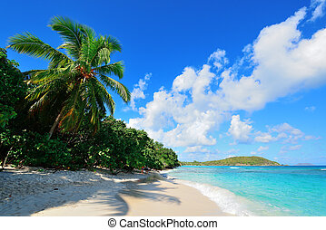 Virgin Islands Beach - Colorful beach with coconut tree and...