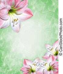 Amaryllis pink flowers Border - Image and illustration...