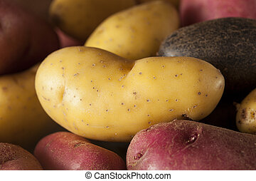 raw organic fingerling potato medley against a background