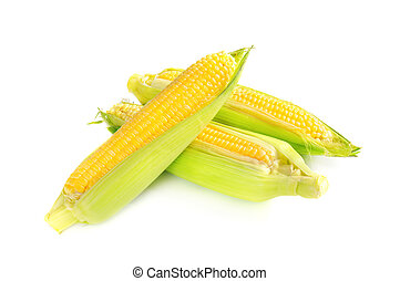 Corn cobs - Fresh raw corn cobs isolated on the white