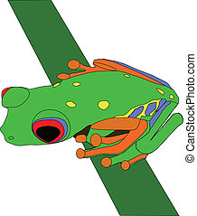 red eyed tree frog - illustration of a red eyed tree frog on...