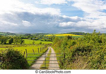Large rapeseed field in Wicklow Ireland