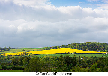 Large rapeseed field in Wicklow Ireland