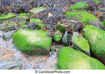Seaweed and moss covered rocks