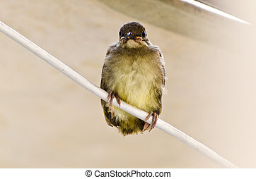 Baby bird on wire