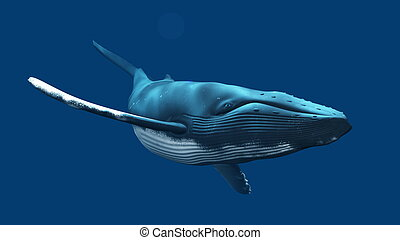 whale - image of whale