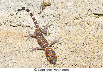 Gecko cling to the wall