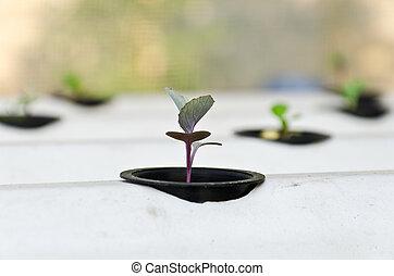 hydroponic, système, plant