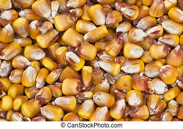 Background of dried corn