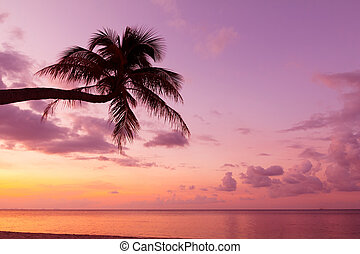 Tropical coast with coconut palm tree silhouette at sunset