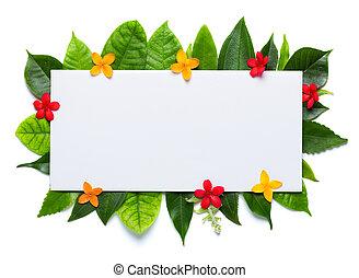 fresco, verde, folhas, flores, isolado, branca, fundo, em...