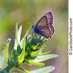 butterfly on the top of green plant - butterfly rests on the...