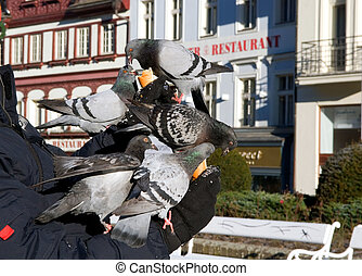 hungry pigeons on a background a restaurant