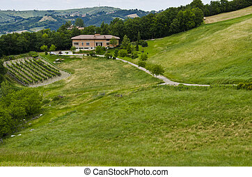 Farmhouse,vineyards and field