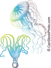 Jellyfish And Octopus, Vector - Colorful jellyfish and...