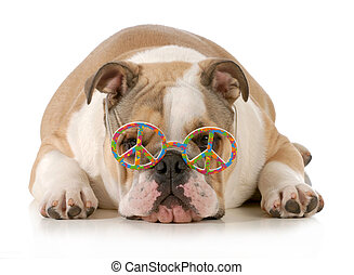 happy dog - english bulldog wearing peace sign glasses...