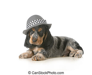 cute puppy - english cocker spaniel puppy wearing hat...