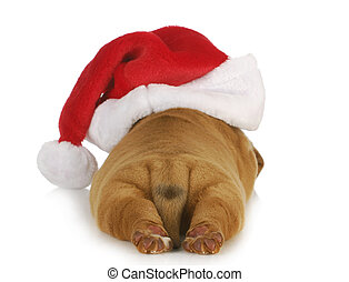 santa dog - santa puppy - dogue de bordeaux puppy wearing...