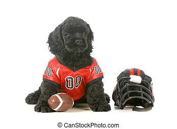 sports hound - american cocker spaniel puppy wearing...