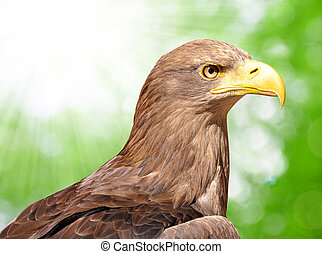sea eagle on green background