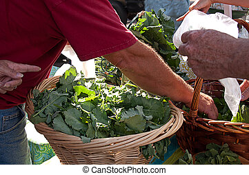 Hands Gathering Leafy Green Vegetables - Hands reaching and...